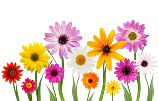 This-stock-photo-of-spring-flowers-on-a-white-background-by