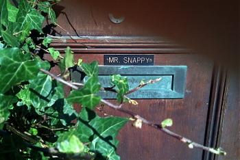 Mr_snappy
